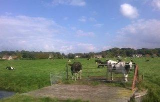 Landbouw+eist+volwaardige+plek+in+plan+Gooi+en+Vechtstreek