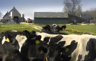 Gemiddelde melkveehouder net uit de kosten