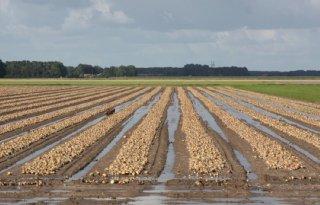 Rijn en IJssel: laag gebied blijft kwetsbaar bij neerslag
