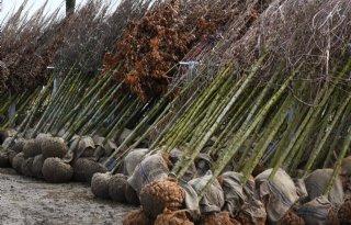 Topjaar voor bedrijven in bos- en haagplantsoen