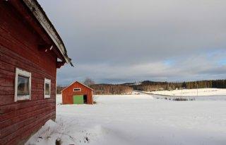 Groeiseizoen in Finland maakt graanteelt lastig