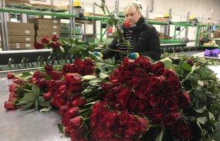 Valentijnsdag+pakt+dit+jaar+goed+uit+voor+bloemenkwekers