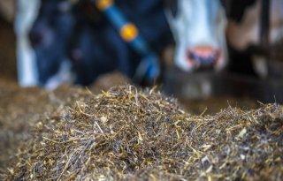 Veehouder%3A+%27Gezonde+Partners+zorgt+voor+lagere+dierenartskosten%27