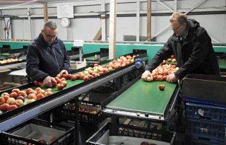 Boerderijwinkel+is+goede+aanvulling+op+fruitteeltbedrijf