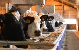 Melkveehouder%3A+%27Zuinig+met+voer+was+nooit+zo+belangrijk%27