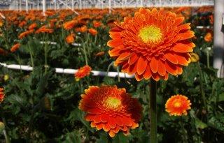 Website+internationaal+visitekaartje+van+tuinbouw