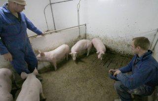 Van Dam bouwt varkenstoilet naar eigen ontwerp