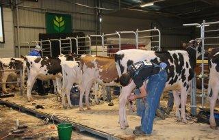 Jong+geleerd+is+oud+gedaan+tijdens+Junior+Holsteinshow