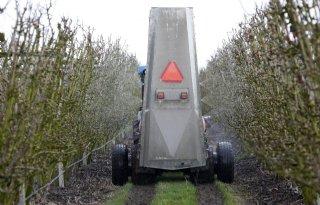 Biologisch middel werkt goed bij schurftbestrijding appels
