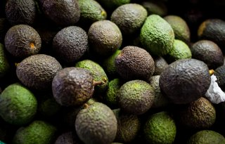 Avocado%27s+uit+Colombia+steeds+duurzamer