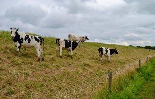 LTO+en+waterschap+adviseren+vee+van+taluds+te+houden
