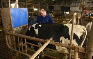Melkveehouder voert extra brok door krapte ruwvoer
