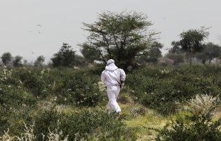 Sprinkhaanbestrijding Afrika heeft nog weinig resultaat