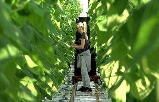 Nederlanders, help ons oogsten!