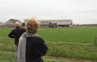 Koeiendans voor klein publiek