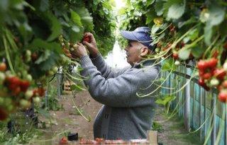 'Zorgverzekering migrant hoort bij goed werkgeverschap'