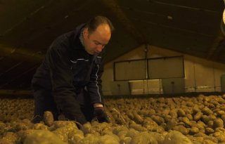 Miljoen ton aardappelen door coronavirus onverkoopbaar