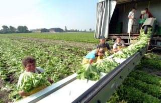 40.000 Fransen melden zich voor oogst