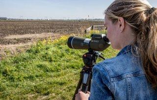 Hoogeveen: 'Tussentijdse tellingen verbeteren weidevogelbeheer'