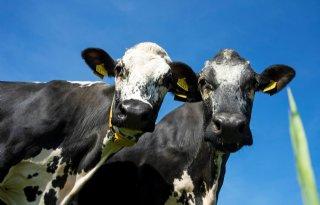 LTO: landbouw te weinig betrokken bij omgevingsvisie Soest