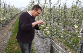 Fruitteler+Wisse%3A+%27Het+is+met+de+kwaliteit+alles+of+niks%27