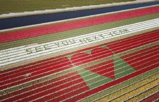 Hoopvolle+boodschap+in+bloeiend+tulpenveld