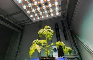 Deep+learning+helpt+bij+herkennen+van+planten