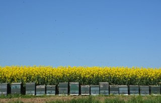 Biochar interessant als substraat in boomteelt