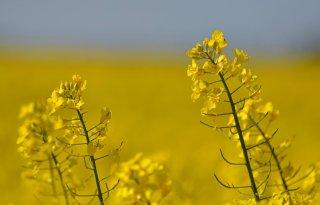 Duitse+Boerenbond%3A+%27Stop+stilstand+in+biobrandstoffen%27