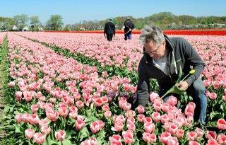 Kweker merkt dat gemeentes vaker kiezen voor biobollen