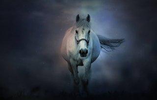 LTO+lanceert+Paardengriep%2Enl