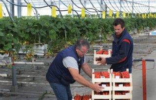 Coronacrisis stuwt verkoop zachtfruit bij Van As in Tricht