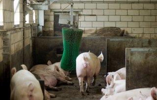 RDA%3A+zet+het+dier+voorop+in+kringlooplandbouw
