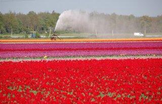 Droogte baart al zorgen in Zuid- en Oost-Nederland