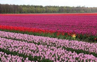 Gewasbeschermingsmiddelen+laten+residuen+achter+op+bloembollen
