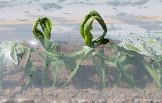 Ook+biologisch+afbreekbaar+plastic+vervuilt+bodem