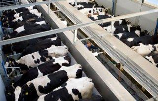 Melkveehouders+hebben+weinig+zicht+op+energieverbruik