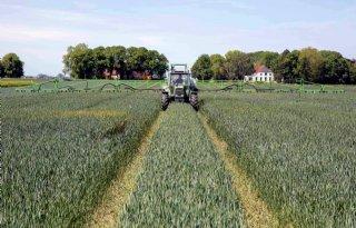 SPNA%2Drassenproef+wintertarwe%3A+gemiddeld+11%2C69+ton+per+hectare