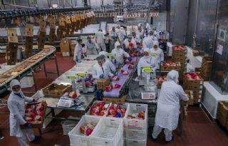 FNV vreest voor corona-uitbraak in pluimveeslachterijen