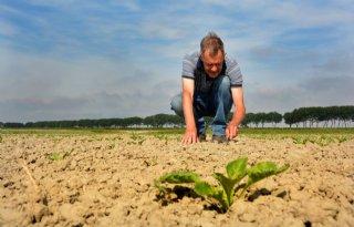 Zeeuwse boeren moedeloos van de droogte