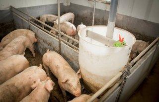 Varkenshouders+besparen+kosten+met+MijnVoer