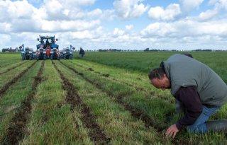 Proef met sorghum als achtervang voor mais op veengrond