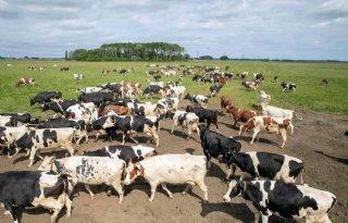 Winkelprijs rundvlees relatief hoog, prijsdruk in keten