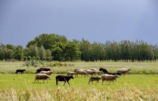 Ministerie+onderzoekt+belemmeringen+voor+agrobosbouw