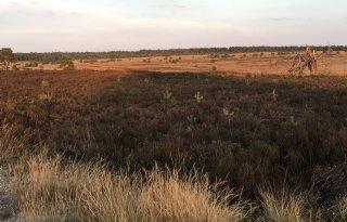 Miljoen+gratis+bomen+voor+heggen+en+hagen+op+platteland