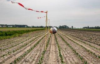 West-Friese vollegrondsgroentetelers komen met eigen ganzenplan