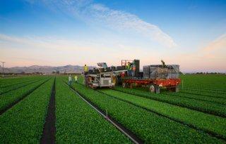 Groenteketens+willen+versneld+mechanisch+oogsten