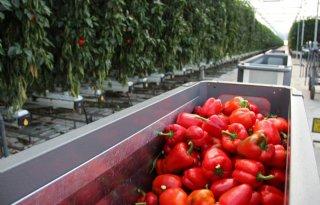 Omzet+Harvest+House+groeit+ruim+10+procent