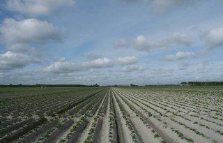 Inagro: aardappelen in rij bemesten scoort financieel beste