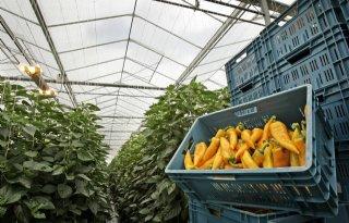 Eigen+verklaring+noodzakelijk+bij+steunmaatregel+tuinbouw